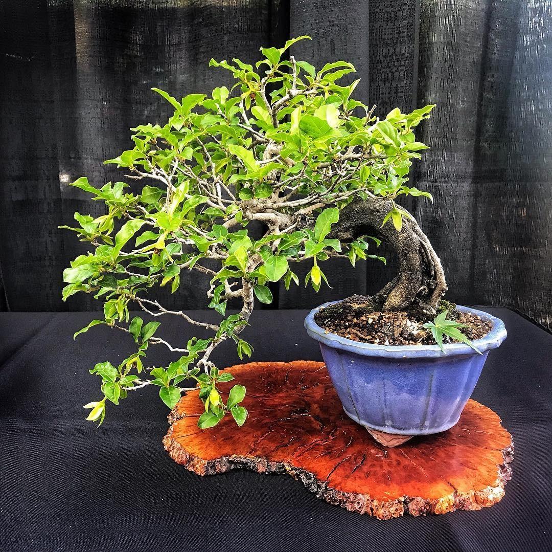 Bonsai Exhibition Visitnebraska Com