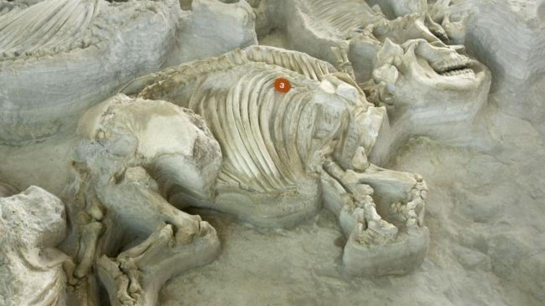 Ashfall Fossil Beds State Historical Park Visitnebraska Com