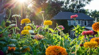 Historic Farm House and Zinnias