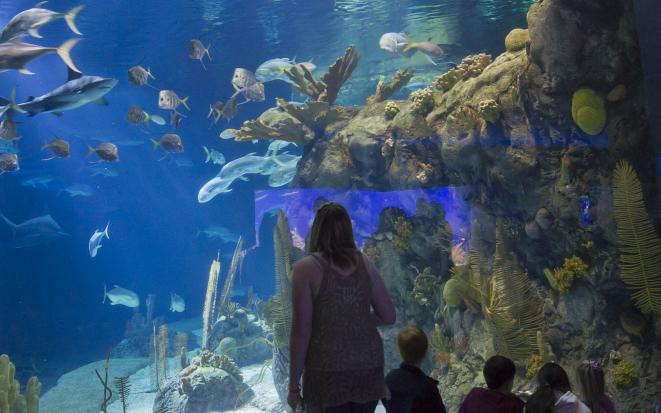Metro_Doorly Aquarium
